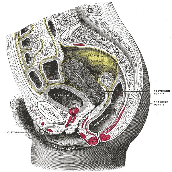 inside-vagina